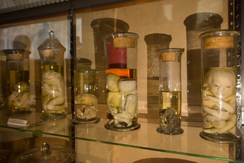 musee_sciences_medicales-9327
