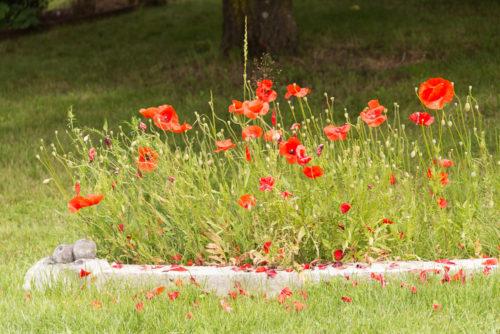 jardin_jocelyne_victor-9215