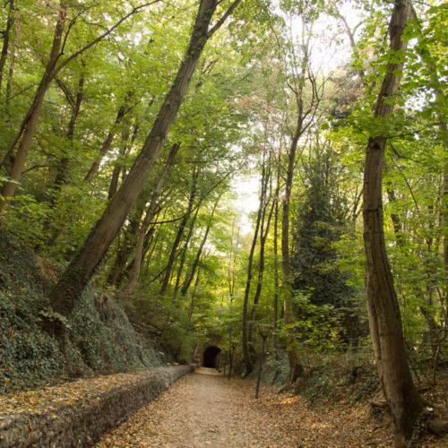 La voie verte de Champvert