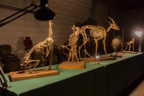 musee_sciences_medicales-9254