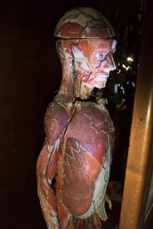 musee_sciences_medicales-9271