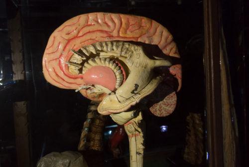 musee_sciences_medicales-9303