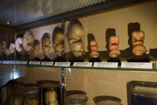 musee_sciences_medicales-9331