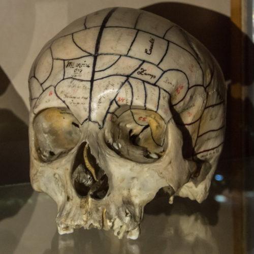 musee_sciences_medicales-9401