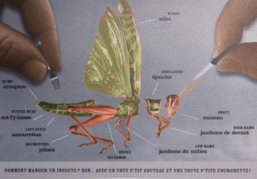 Comment manger un insecte : ben avec un tout p'tit couteau et une toute p'tite fourchette