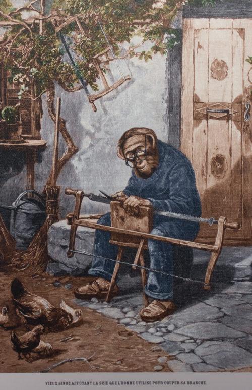 vieux singe affutant la scie que l'homme utilise pour couper sa branche