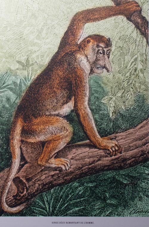 singe déçu remontant de l'homme